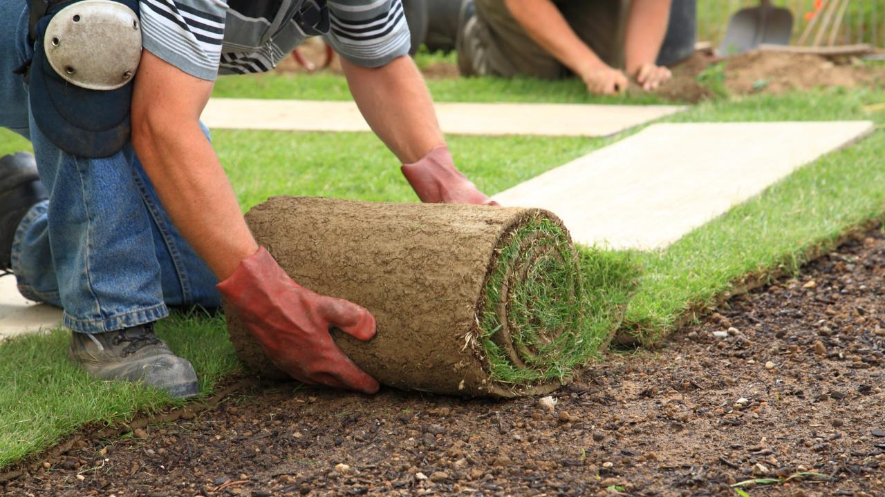 landscaper-laying-sod